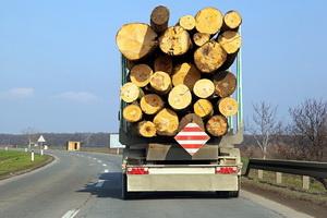 Правила транспортировки древесины